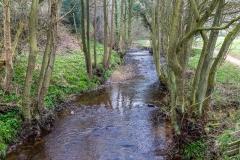 Farndale walk, Farndale daffodils, River Dove