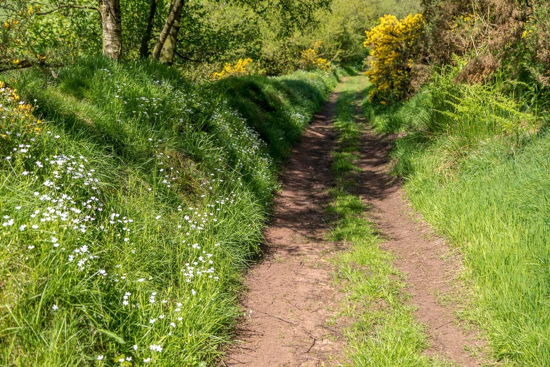 Flakebridge Wood walk, Eden Valley walk