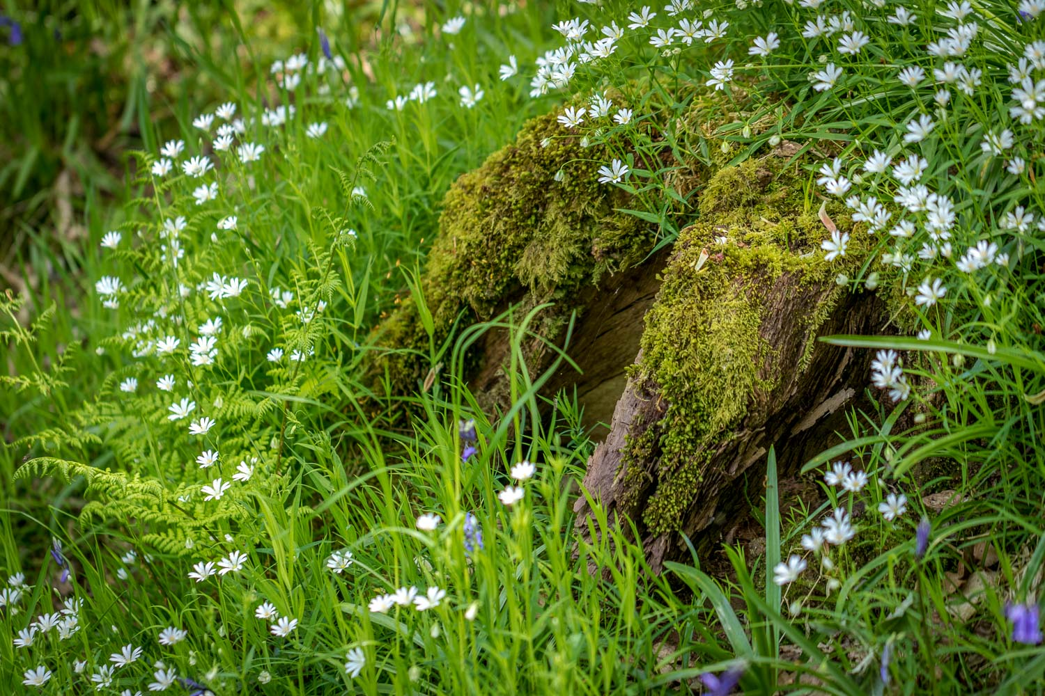 Dufton Ghyll Wood wildflowers