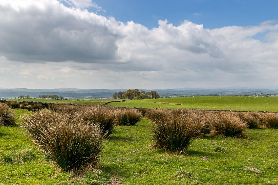 Flakebridge Wood walk, Eden Valley