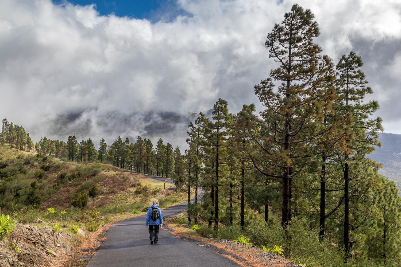 laurel forest Tenerife