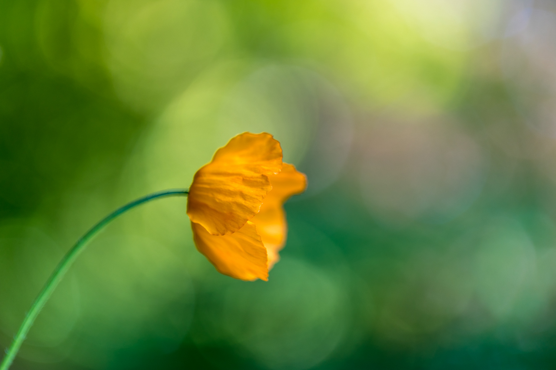 1_flower-4