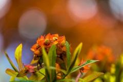1_flower-6