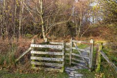Long How Wood, Buttermere