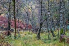 Cummacatta Wood, Borrowdale gate