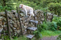 Step stile in Borrowdale