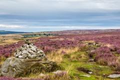 Goathland walk, moor