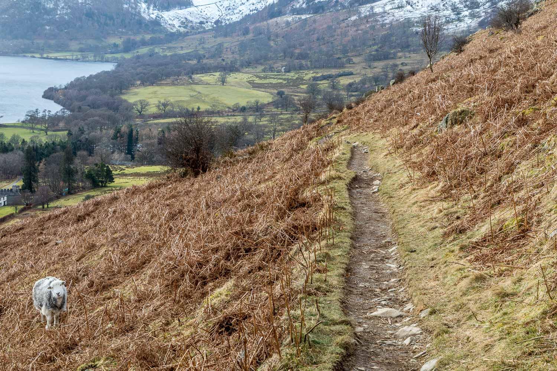 Gowbarrow Fell walk