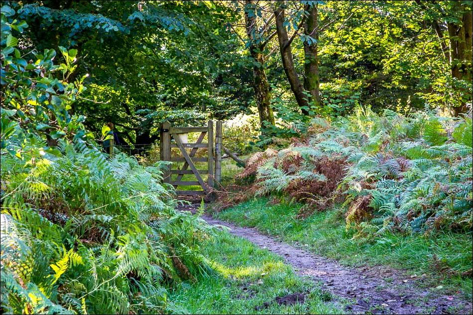 woodland near Aira Force