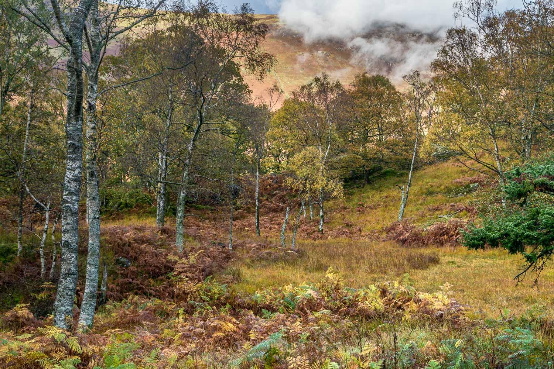 Cummacatta Wood, Maiden Moor