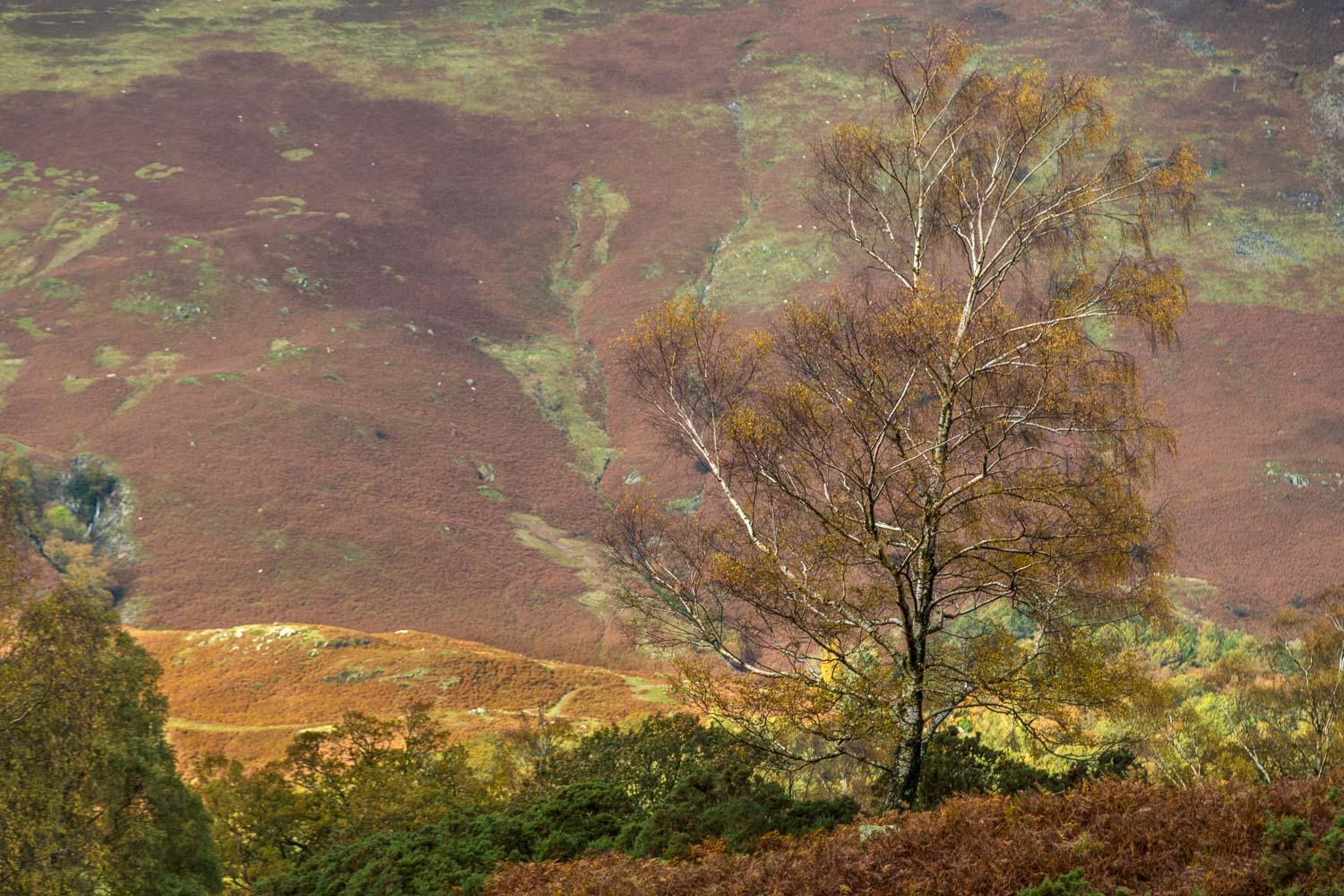 High Spy, Borrowdale birch