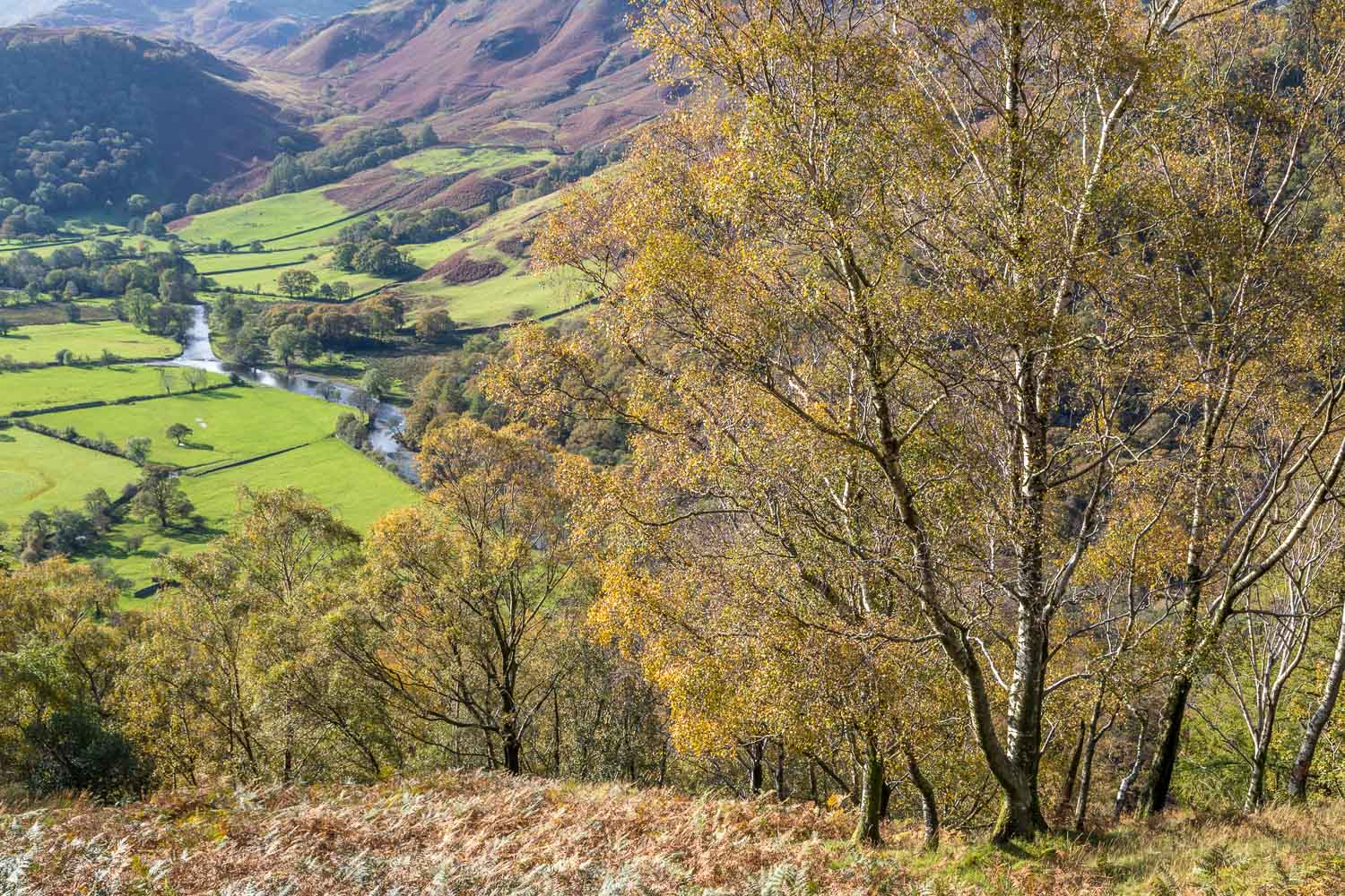 Grange Fell walk, Borrowdale, River Derwent