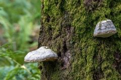 Borrowdale mushrooms