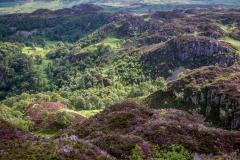 Grange Fell walk, heather