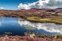 Great Crag walk, Dock Tarn
