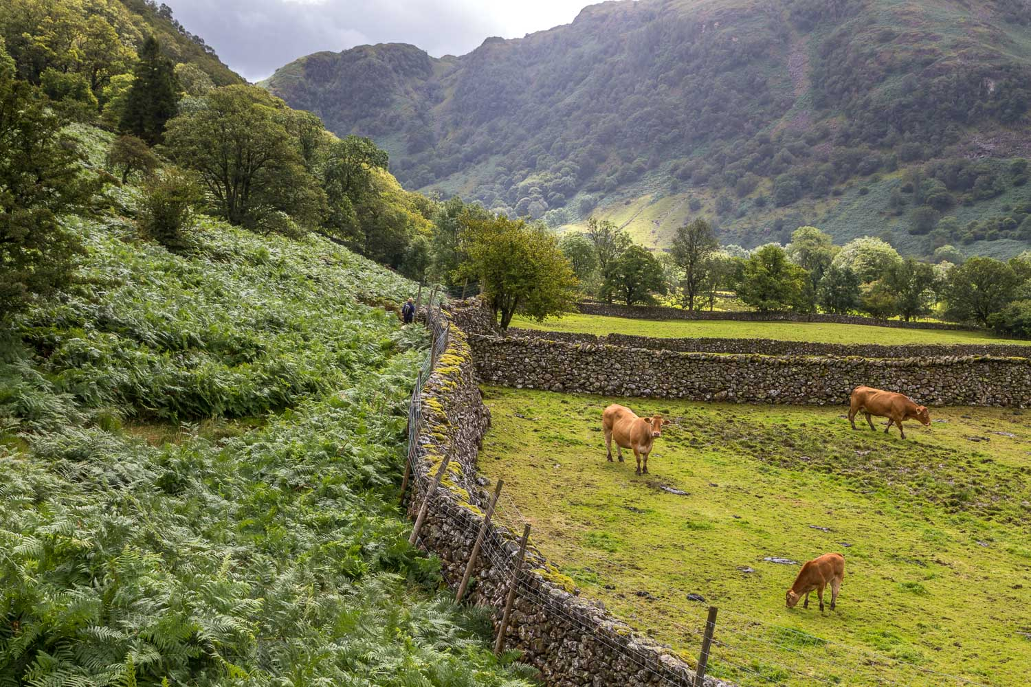 Great Crag walk, Stonethwaite, Borrowdale
