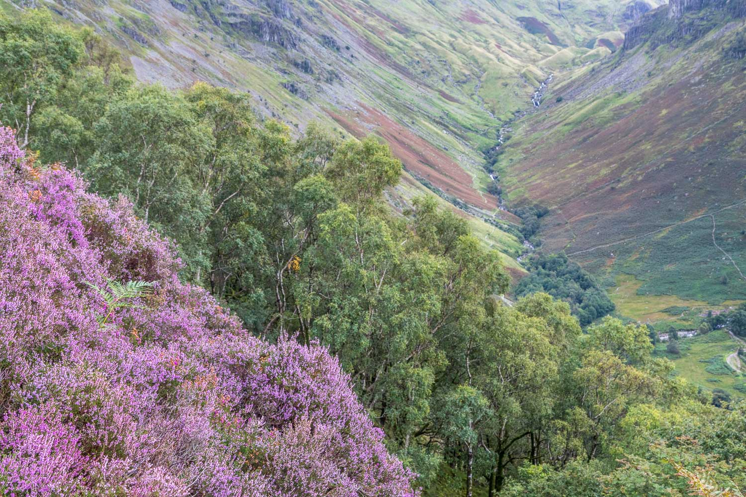 Heather, Greenup Gill