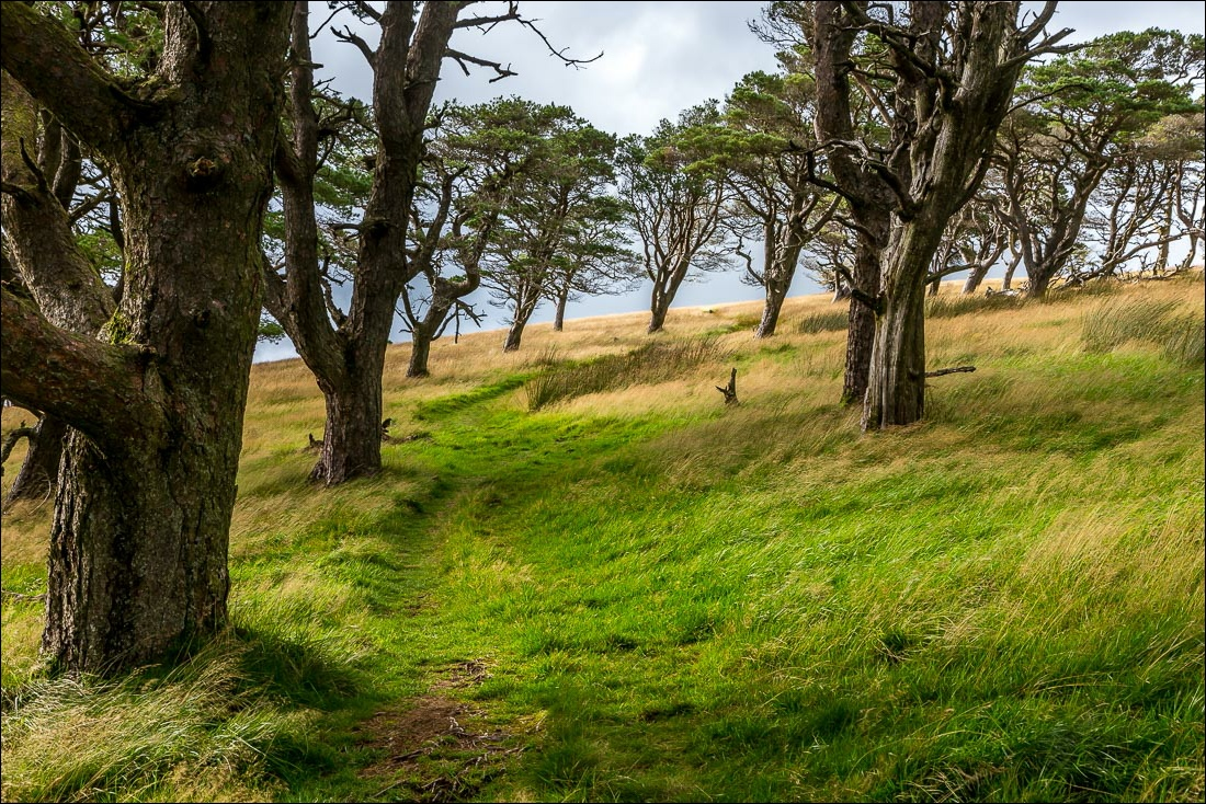 Great Mell Fell trees