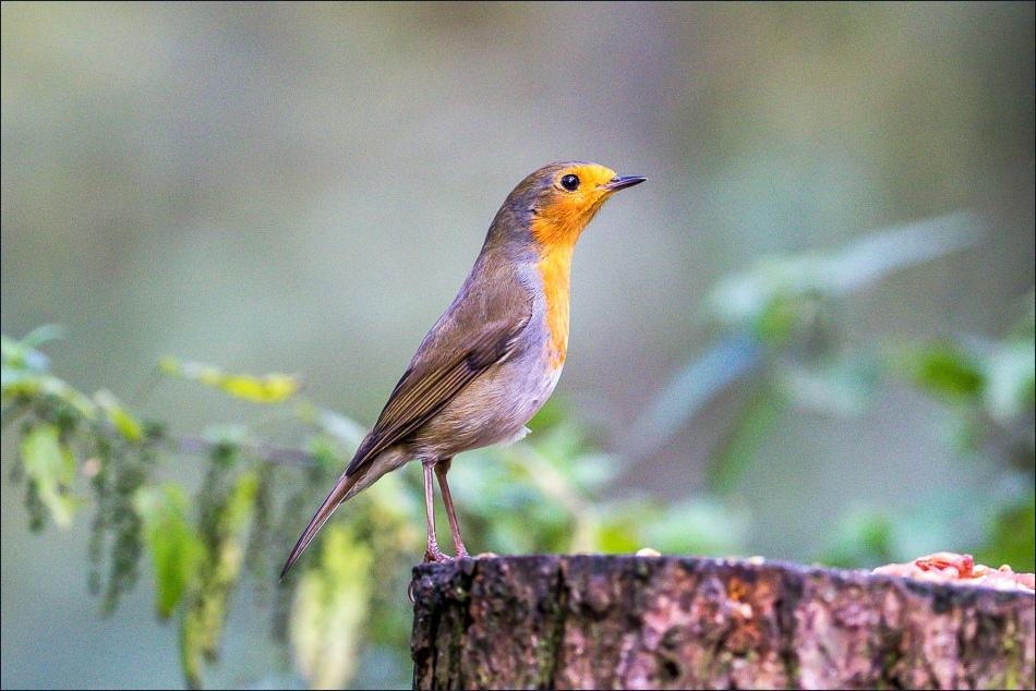 Birdwatcher's car park Forge Valley