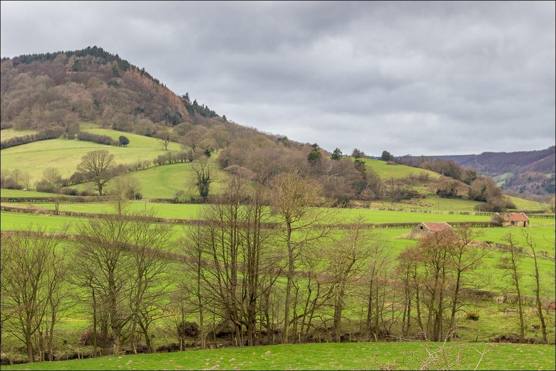 Hackness walk, Coomb Hill