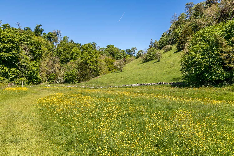 Beresford Dale, meadow