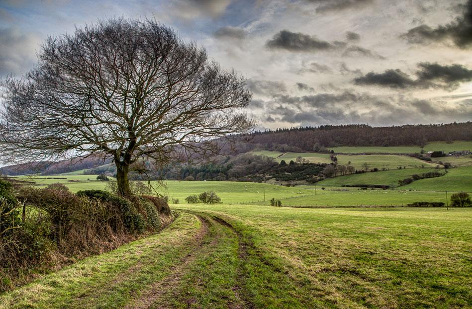 Harwood Dale walk, Reasty Hill
