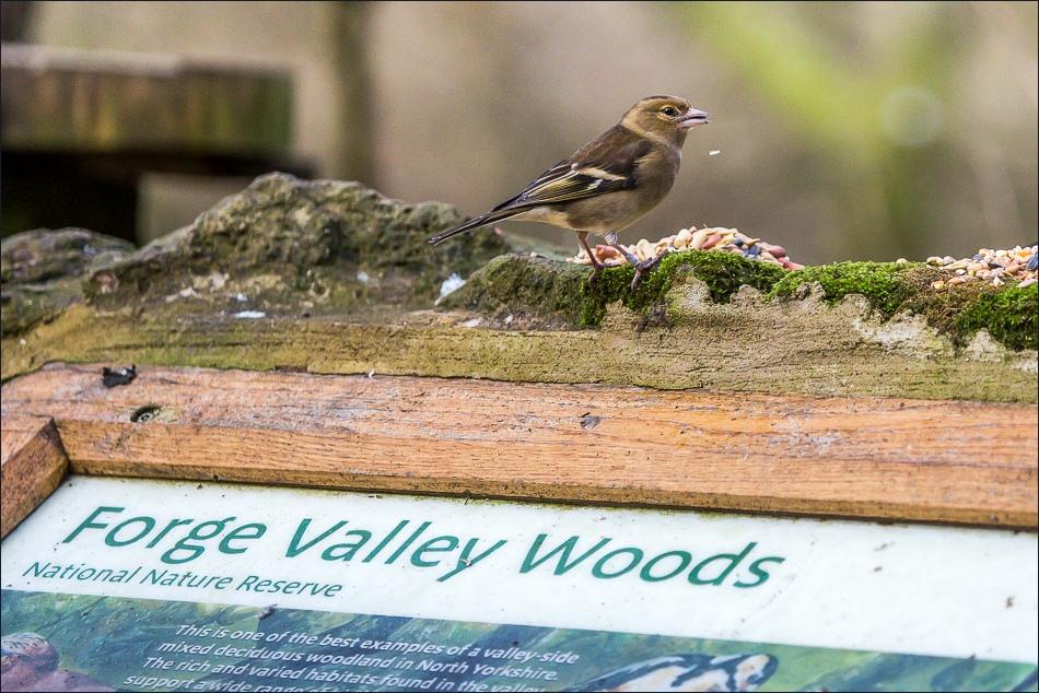 Birdwatchers car park, Forge Valley