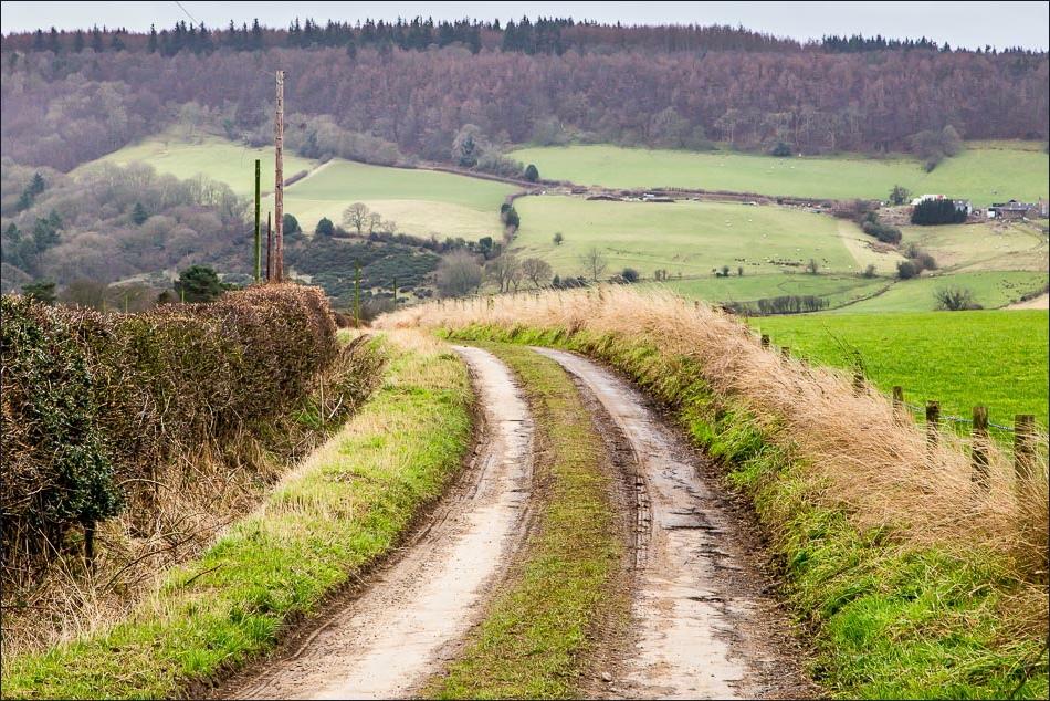 Harwood Dale walk, Broxa Forest