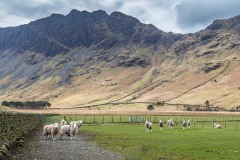 Haystacks from Gatesgarth Farm