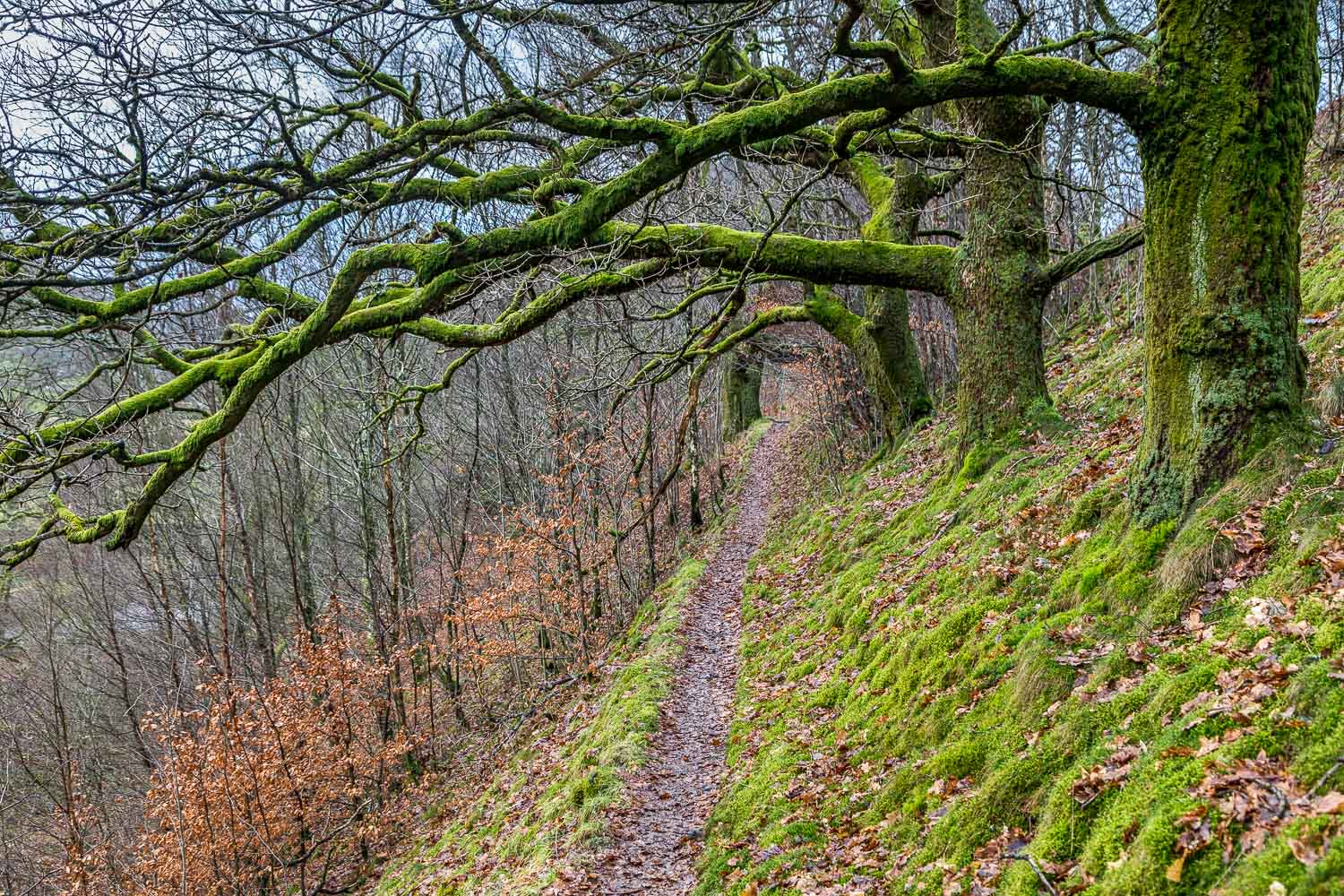 High Rigg walk, St John's in the Vale