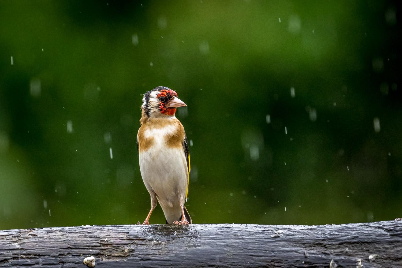 Goldfinch Lake District