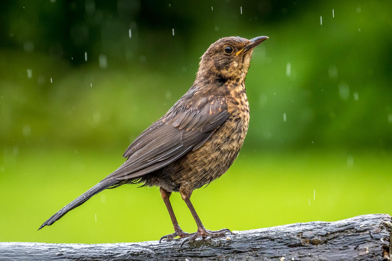 Blackbird Lake District