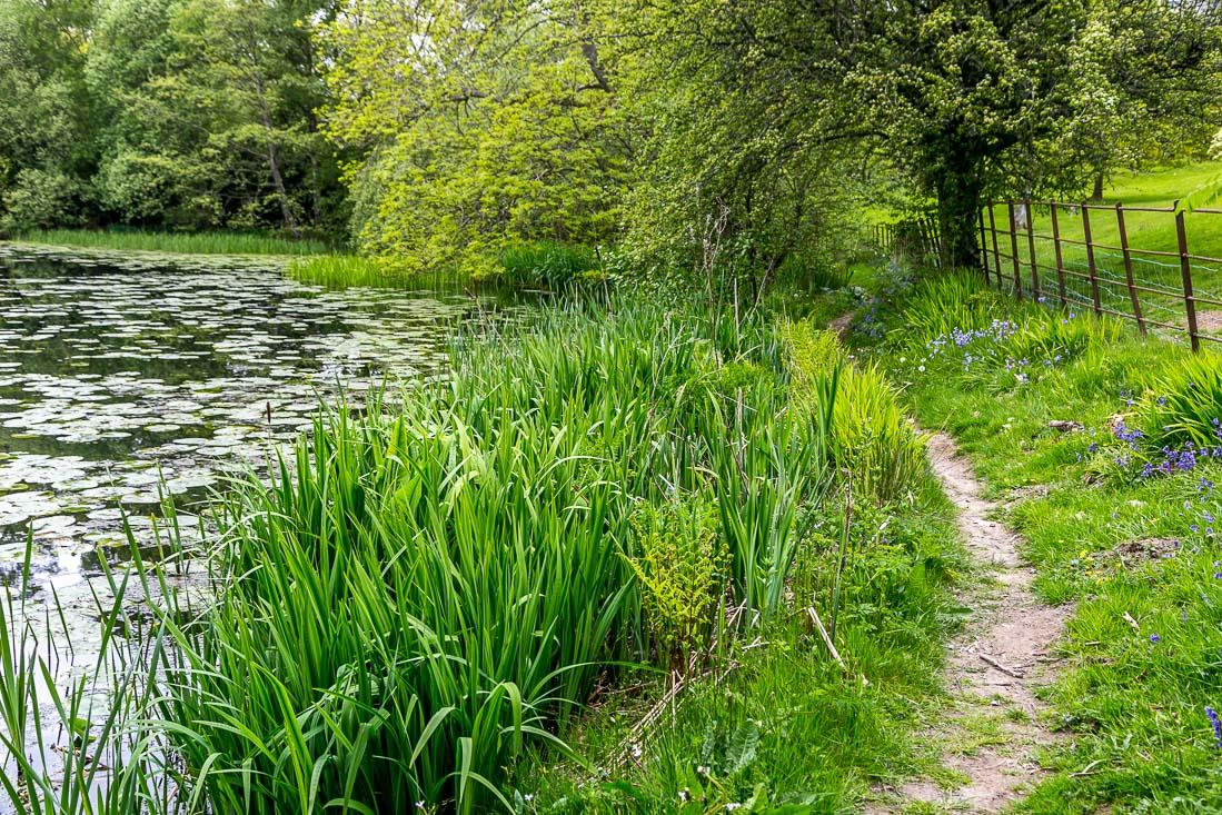 Holehird Gardens, tarn