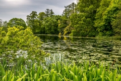 Holehird Gardens walk, tarn