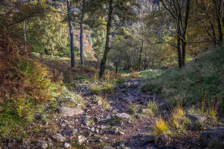 Holme Fell walk, Harry Guards Wood