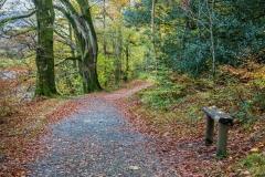 Holme Wood walk