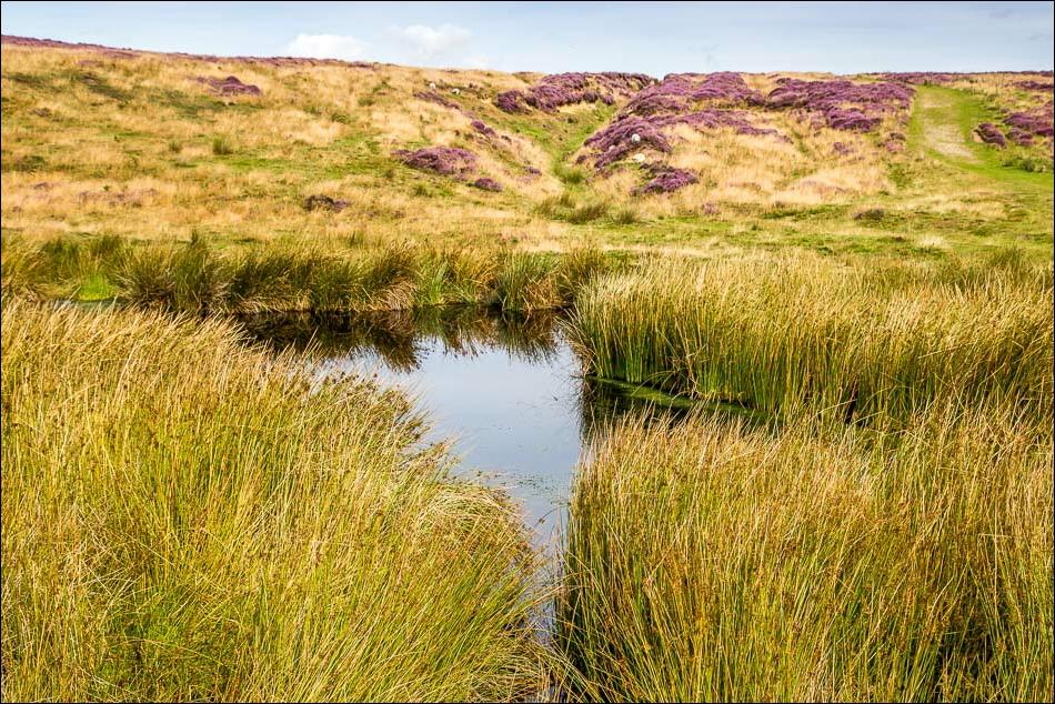 Dundale Pond