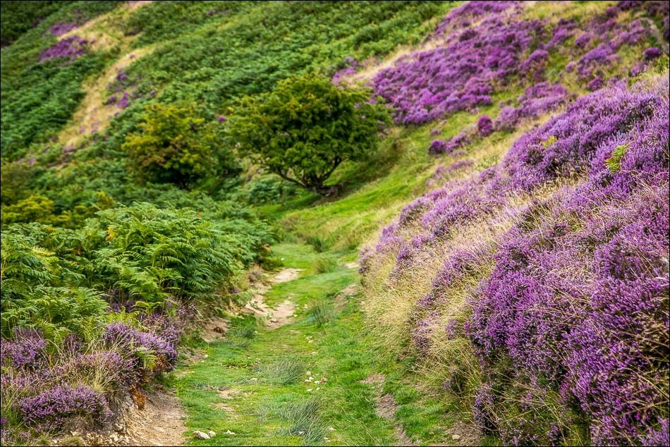 Levisham Moor walk