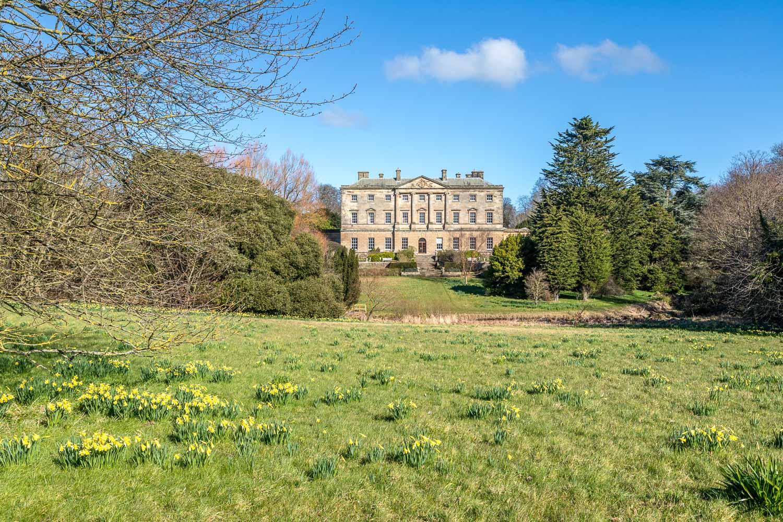 Howick Hall daffodil bank