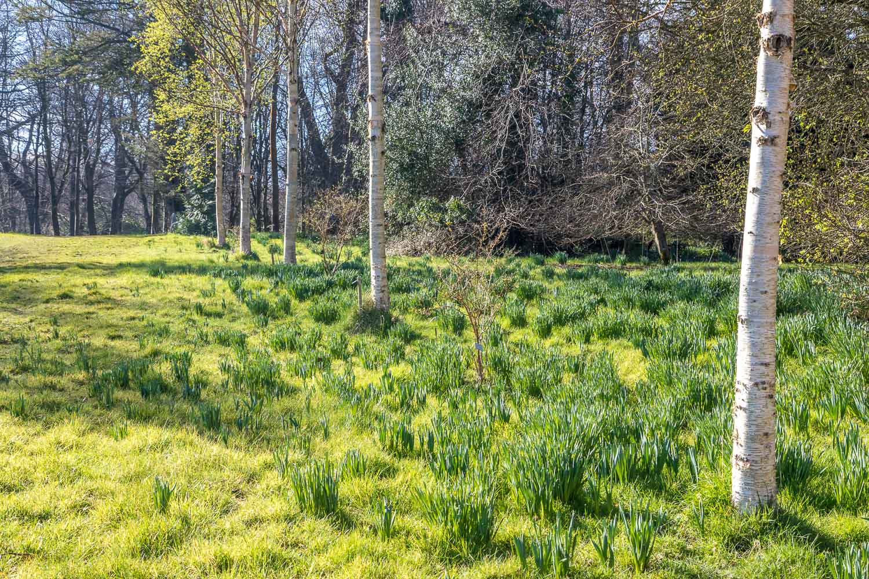 Howick Hall garden