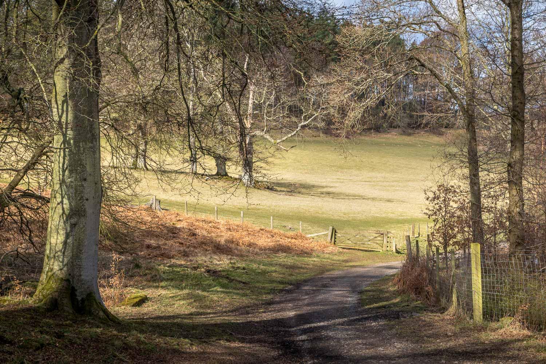 Hulne Park walk