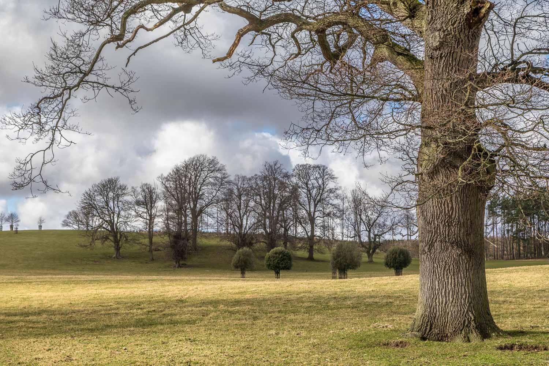 Hulne Park, trees