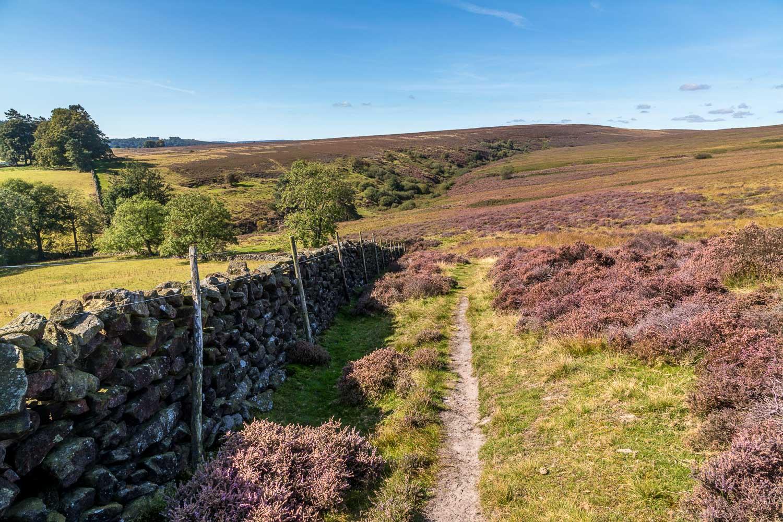 Hutton-le-Hole walk, Spaunton Moor