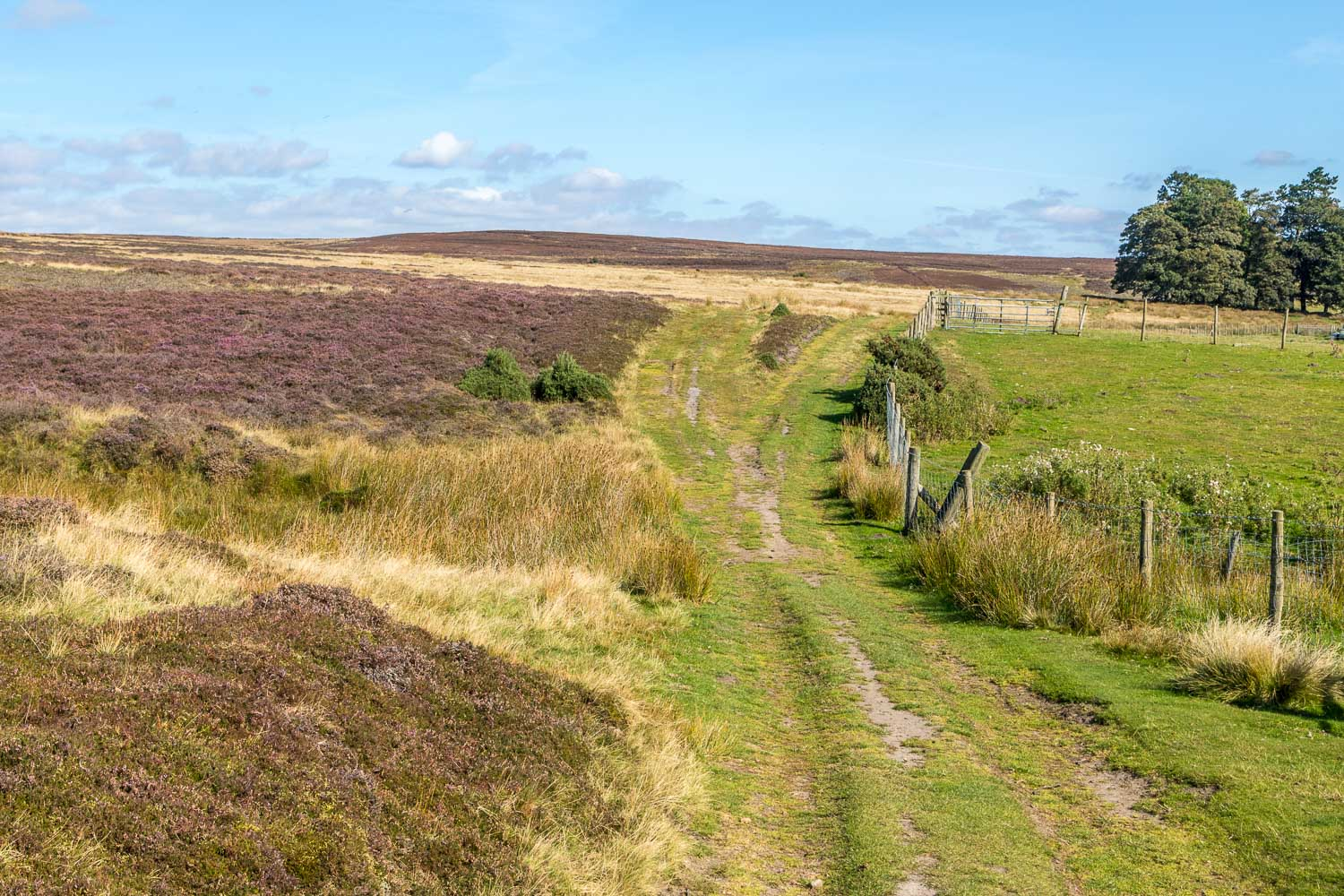 Hutton-le-Hole walk, Spaunton Moor