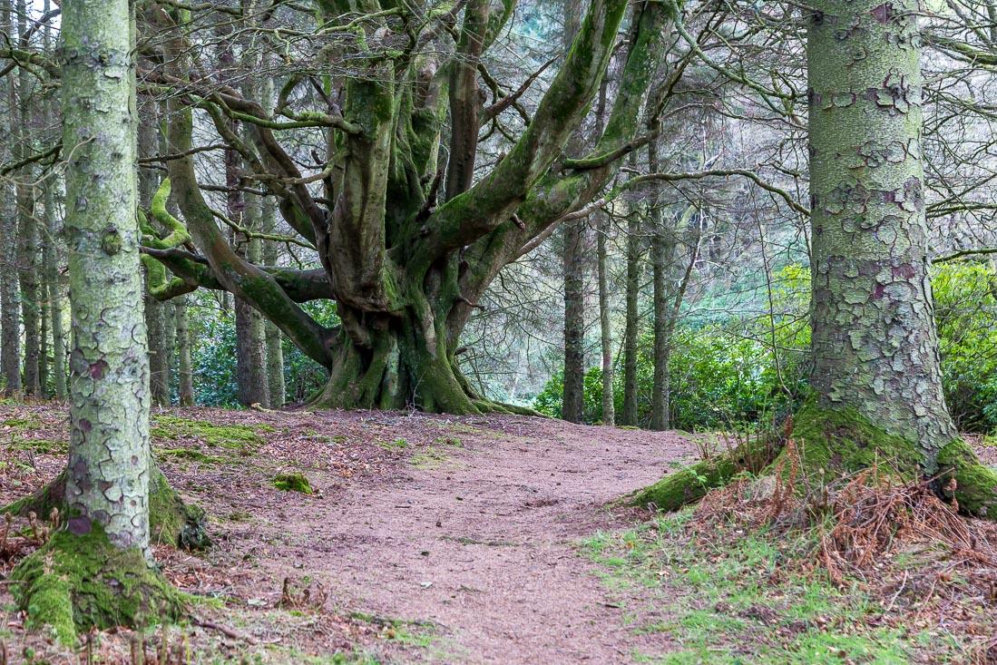 Killantringan walk, Dunksey Gardens