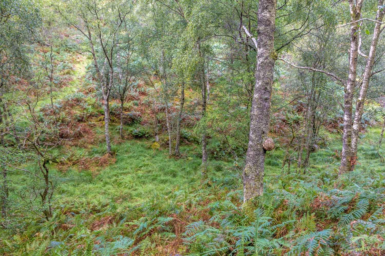 Borrowdale woods