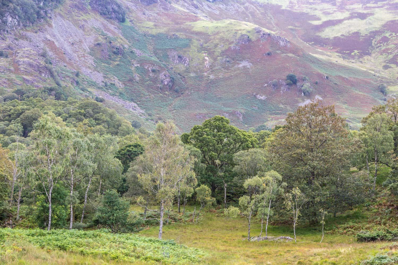 Maiden Moor
