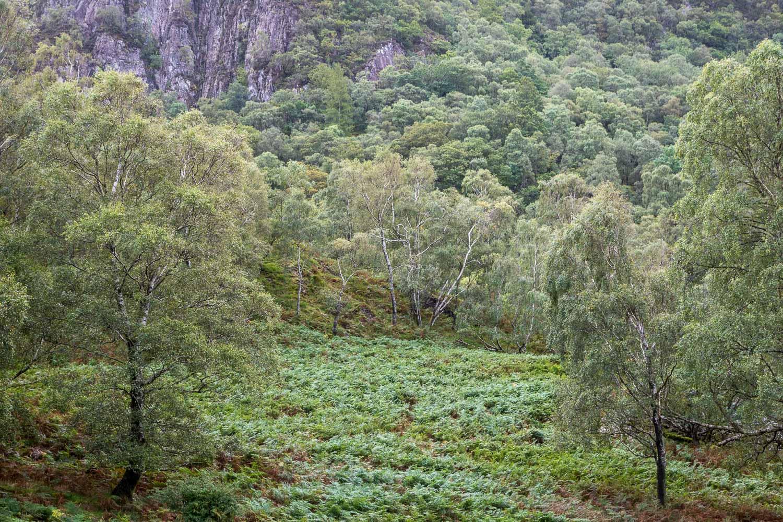 Borrowdale rainforest