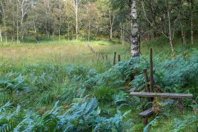 King's How walk, Borrowdale, Long Moss