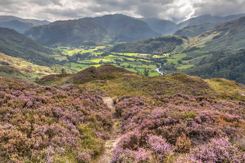 King's How walk, Borrowdale, heather